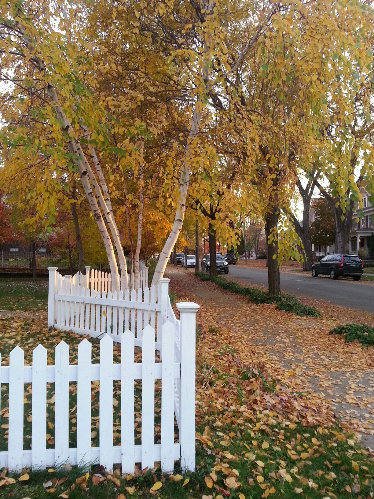 Trees and Fencing in Autumn